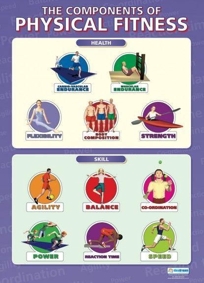#Der #Die #Fitness #Komponenten #körperlichen #Pädagogische #Schulposter The Components of Physical...