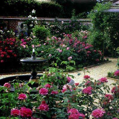 English Rose Garden Rose Garden Design Backyard Garden Layout