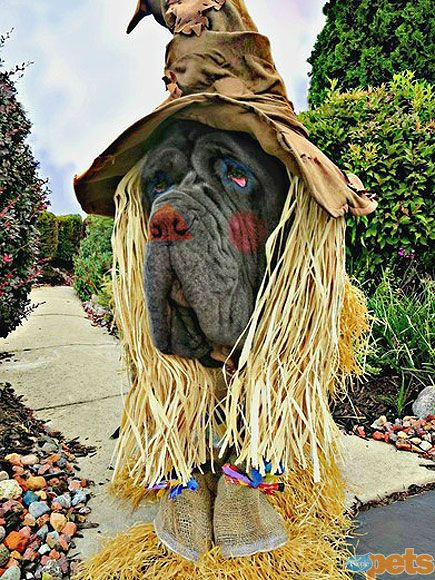 Gallery Of Fame Look At Me Art Work Dog Halloween Costumes