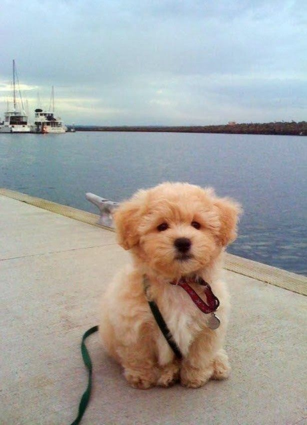 Top Five Puppy Training Tips Learn How To Train Your Puppy