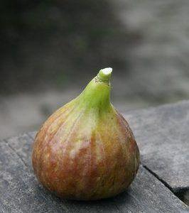 Damit der Feigenbaum Früchte trägt – Pflegetipps für die Feige