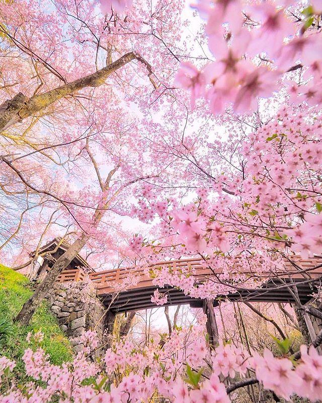 Tatsuya Kurisu From Japan Criss1016 Instagram Photos And Videos Nymph Instagram Adventure
