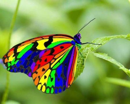 Real Rainbow Butterflies Rainbow Butterfly Colors Beauty