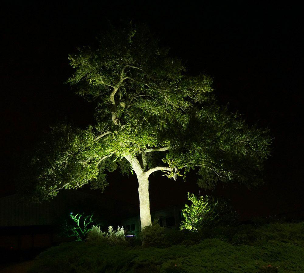 Outdoor Lighting In Dallas Contact Dallas Landscape Lighting Tree Uplighting Landscape Lighting Tree Lighting