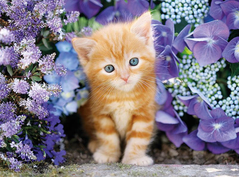 Ginger Cat In Flowers 500 Pieces Clementoni Puzzle Warehouse