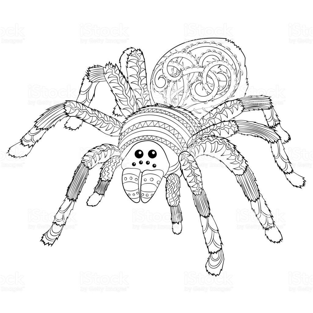 Dessin Araignee Halloween