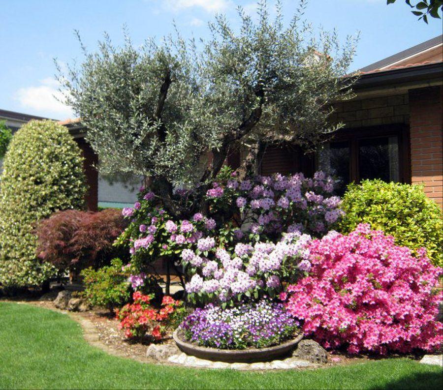 Ulivo e acidofile giardino aiuole e splendidi giardini for Giardini e aiuole