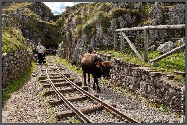 Ruta Lagos De Covadonga En Los Picos De Europa Lagos De Covadonga Lagos Picos De Europa