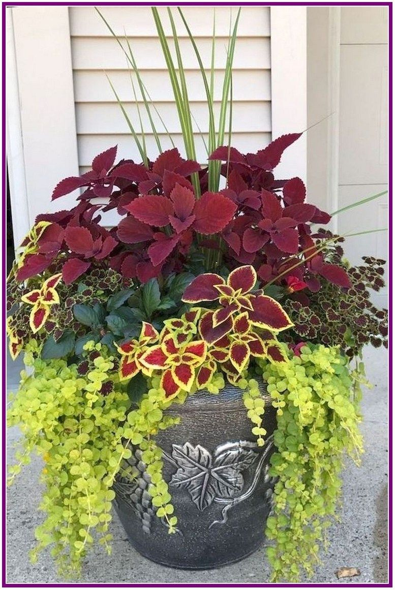27 Pretty Front Door Flower Pots For A Good First Impression 00009 Poserforum Container Gardening Flowers Container Garden Design Container Flowers