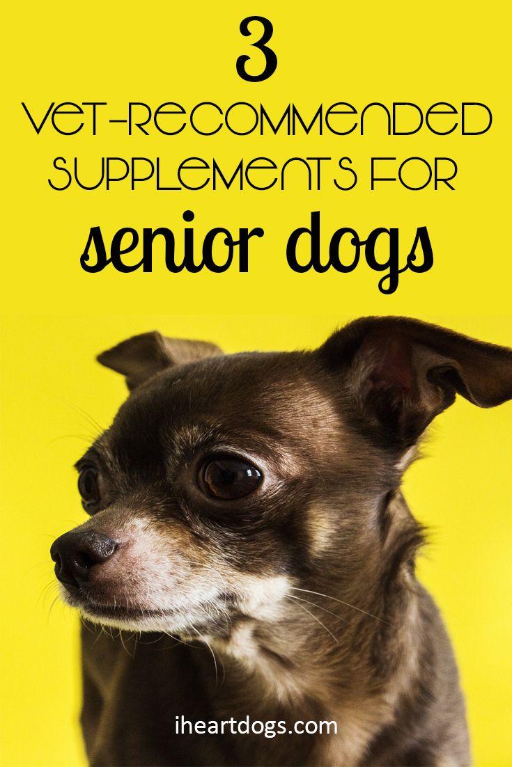 3 Vet Recommended Supplements For Senior Dogs Senior Dog Dog Supplements Dogs