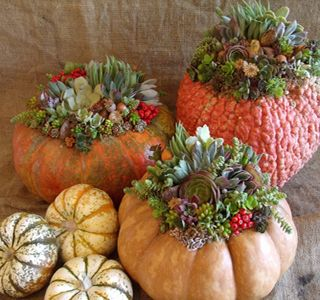 succulent topped pumpkins by Laura Eubanks