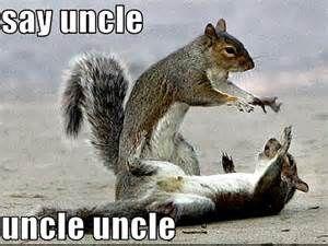 Funny Squirrel Jokes Humor Funny Squirrel Pictures Squirrel Funny Funny Star Wars Pictures