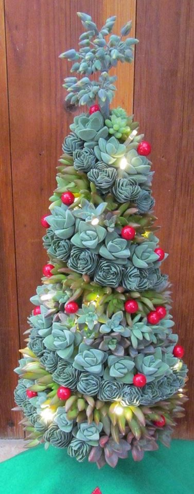 Succulent Christmas Tree    Wow! I have to figure this one out.