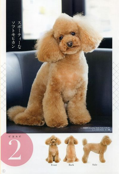 cute mohawk poodle cuts clips