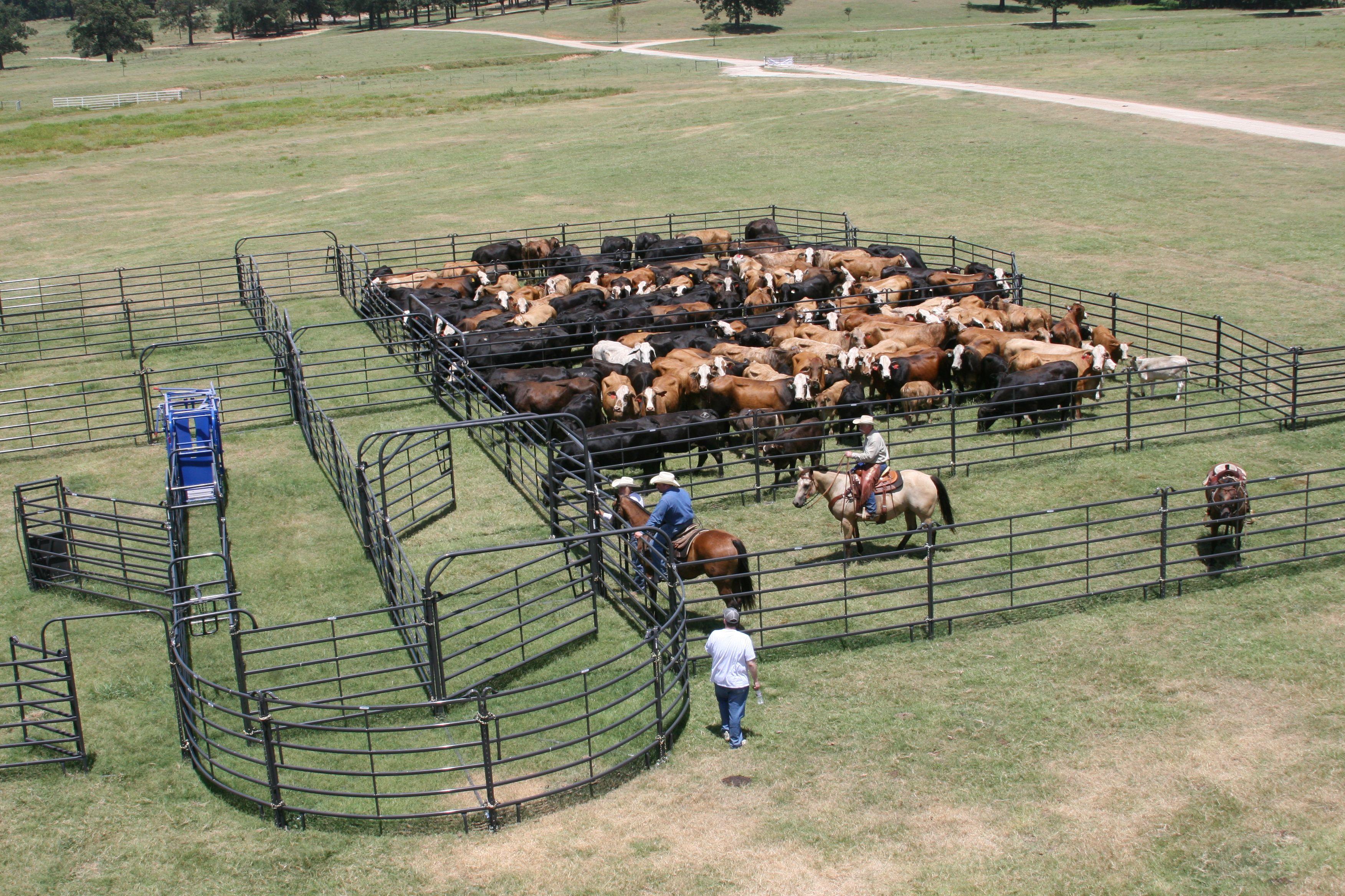 Ranch farm ranch life cattle gate