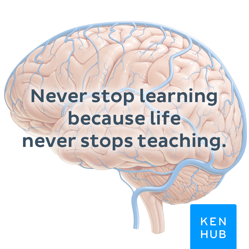 So True And If You Like To Learn Anatomy Kenhub Is The