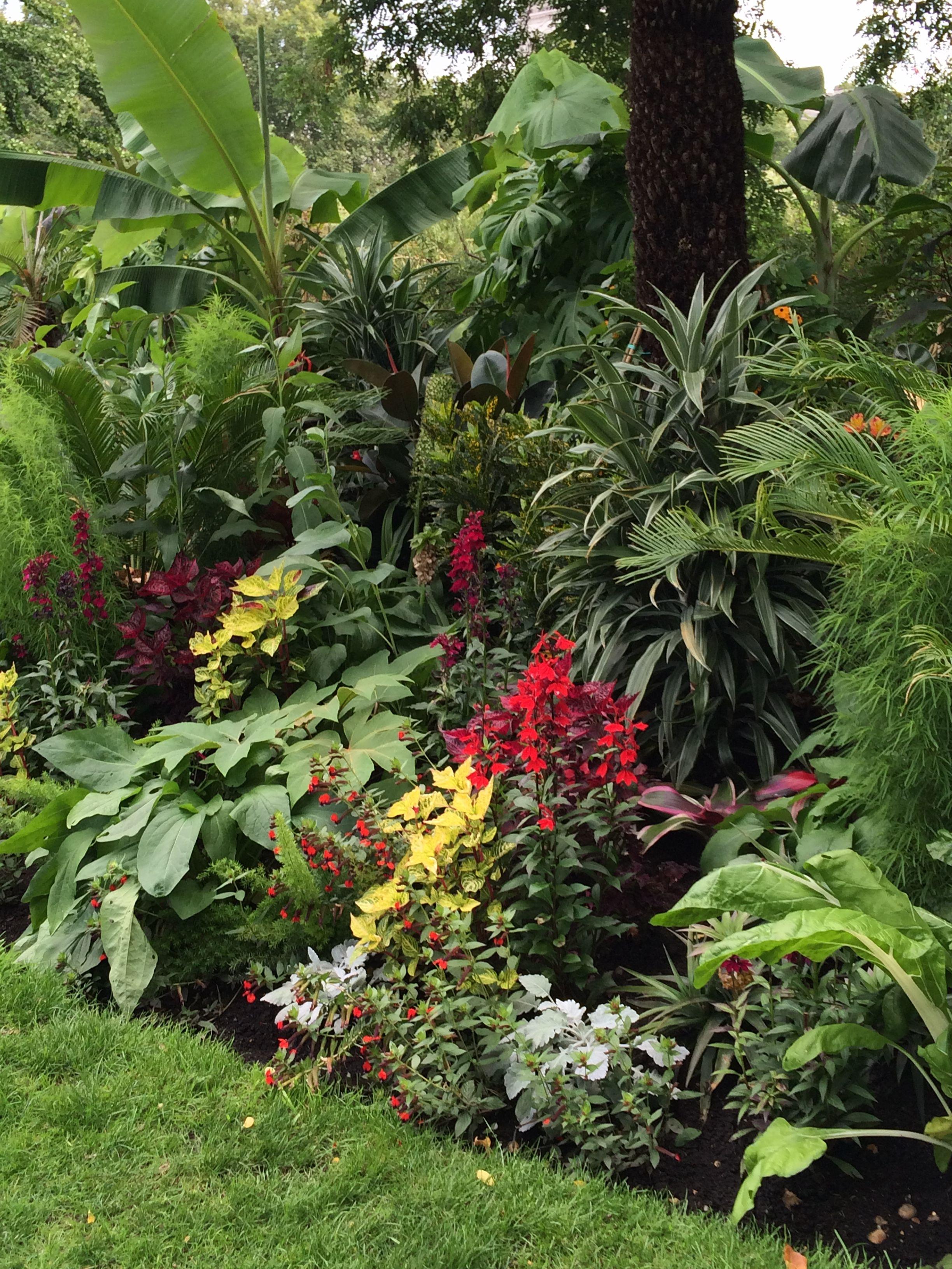 Tropical Gardens, Beach Houses, Exotic, Garden Ideas, Backyard, Gutter Garden,