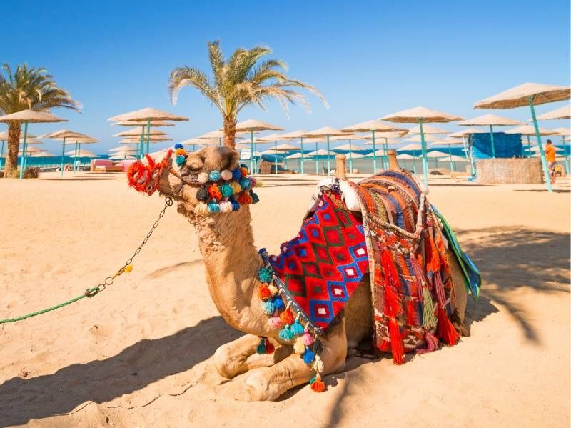 Egypt Christmas OfferWith World Tour Advice http://www ...