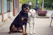 Dogs I want together