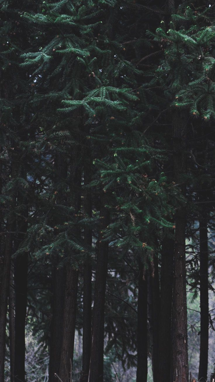 Permalink to Dark Forest Iphone 7 Wallpaper