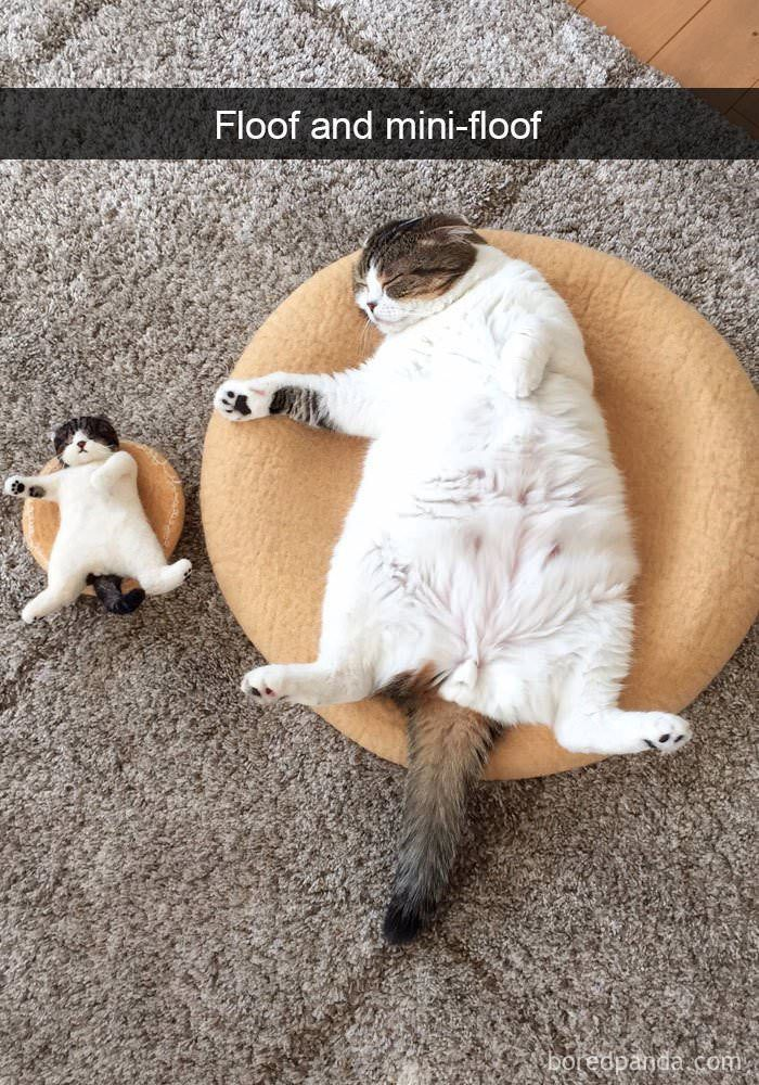 Cats Are Pretty Special And Random Animals Which Means It S Pretty Hard To Snap A Pic Of Them Doing Funny Cat Photos Funny Animal Pictures Funny Cat Pictures