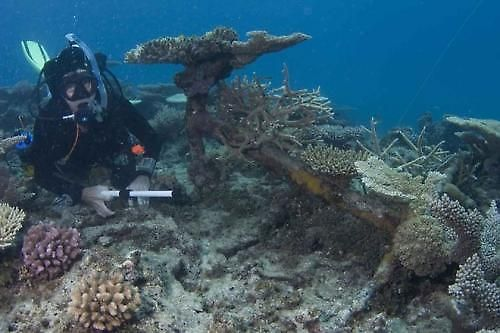 """Divers locate the anchor from the H.M. Schooner 'Mermaid"""" that went down in 1829. Great Barrier Reef, Australia."""