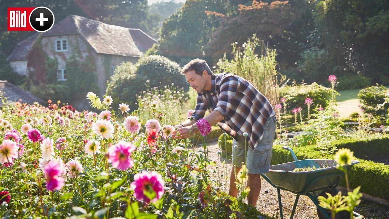 Pin Auf Ideen Fur Meinen Garten