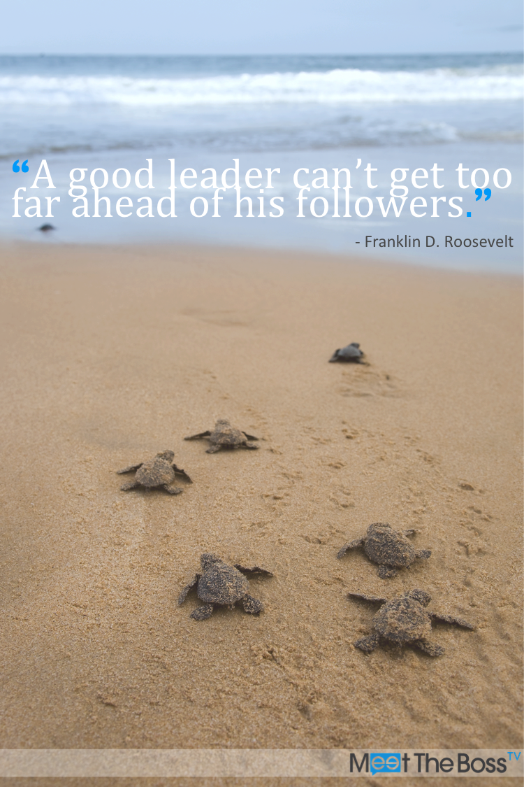Turtle Quotes Franklin Droosevelt  Turtles  Pinterest  Sea Quotes Roosevelt .