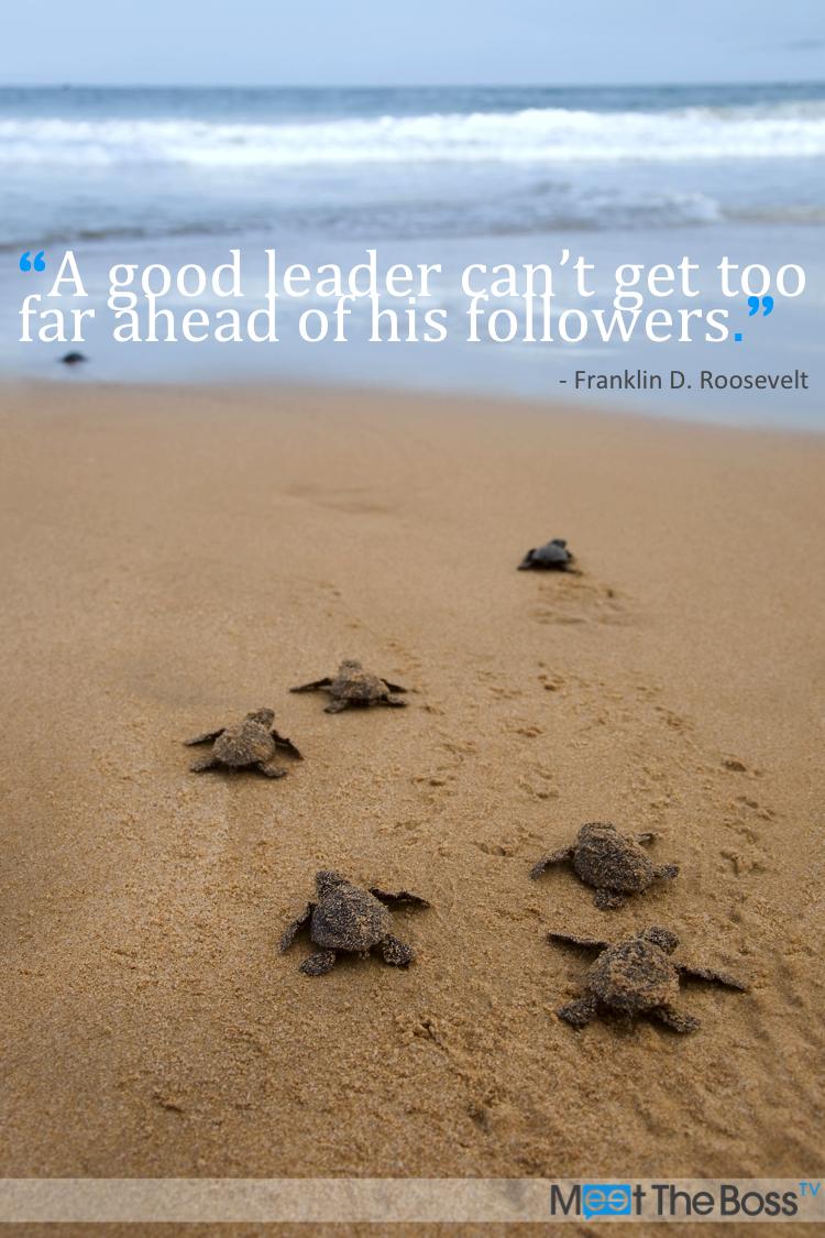 Turtle Quotes Fair Franklin Droosevelt  Turtles  Pinterest  Sea Quotes Roosevelt .