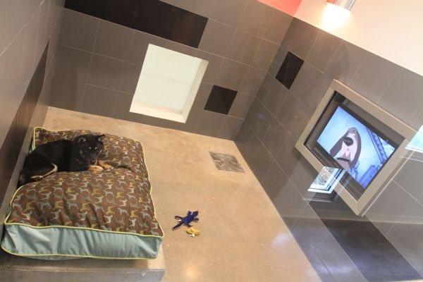 Doggie Kennels At Amusement Parks With Images Dog Boarding Kennels Best Friends Pets Dog Hotel