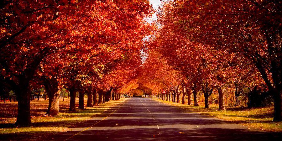 The Click Of The Seasons Autumn Landscape Autumn Trees Autumn Photography