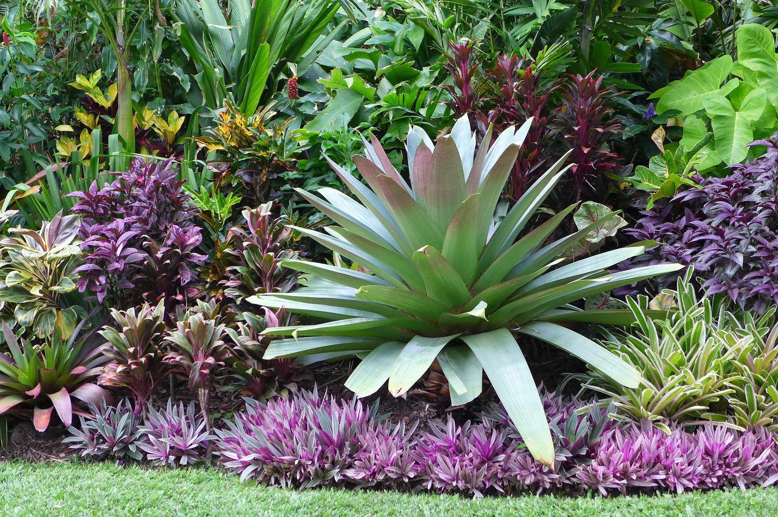 Huge Alcantarea imperialis in the front garden | Tropical ...