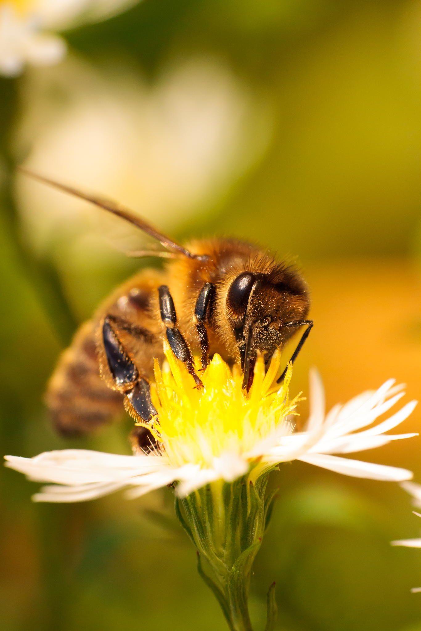 Abeille à miel by Stéfane Gautier Bee hive, Bee