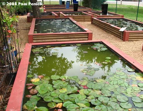 pond display Hill Country Water Gardens in Cedar Park (a suburb ...