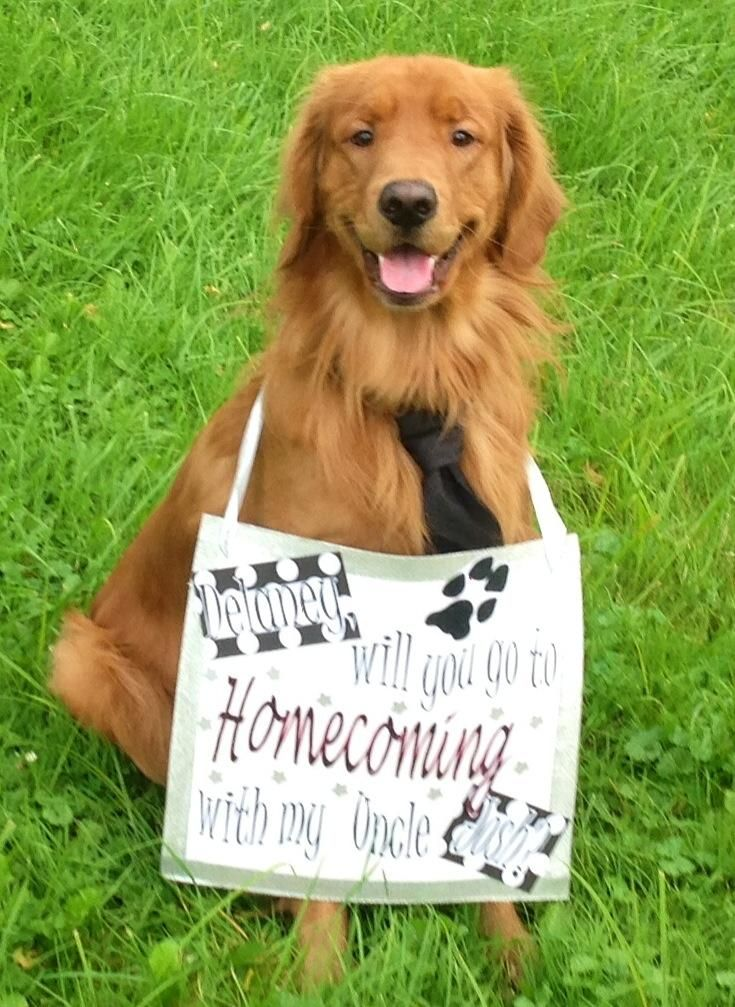How To Ask A Girl To Homecoming Dress Your Dog Up And Make A Sign