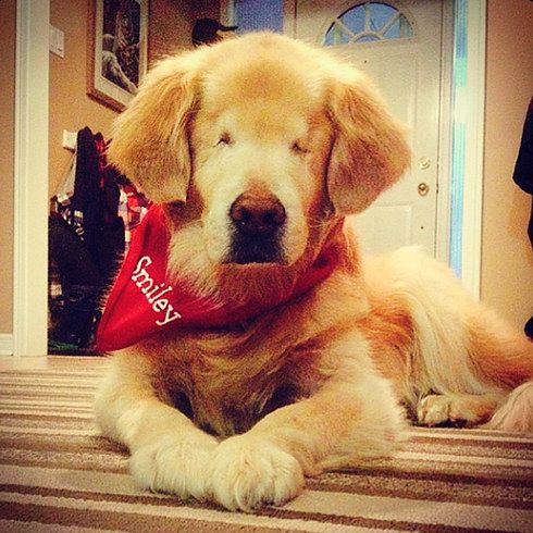 The Internet Is Going Wild For This Adorable Therapy Dog With No
