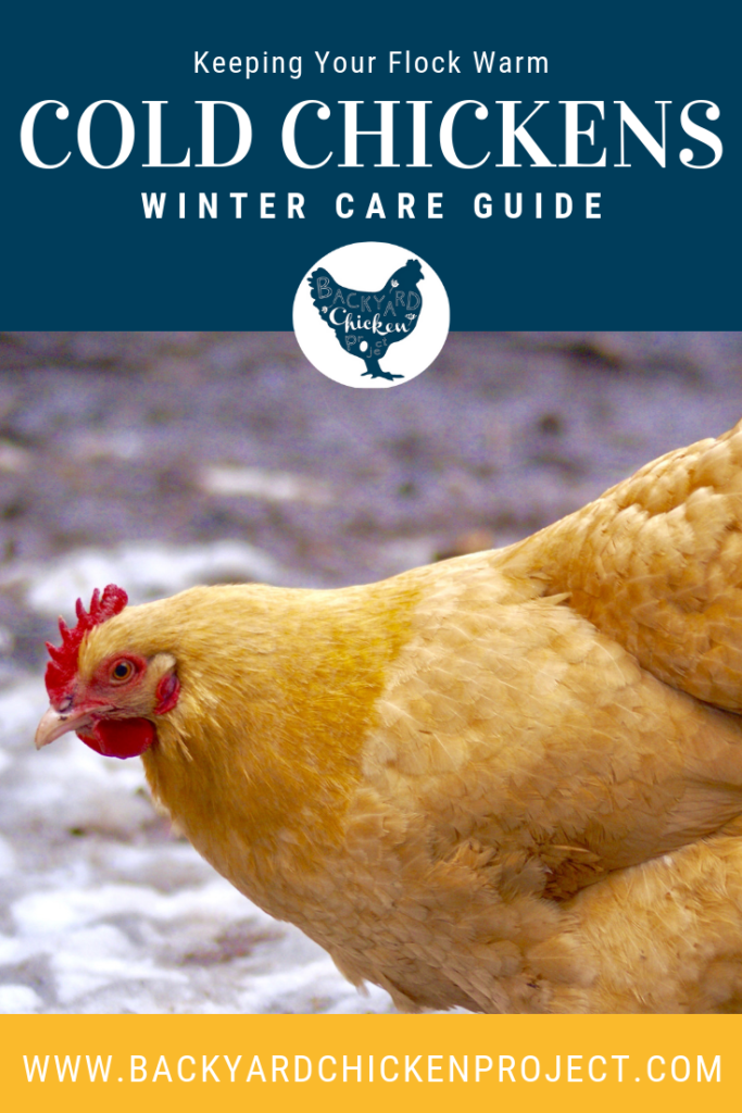 Are Your Chickens Cold?   Chickens backyard, Chickens in ...