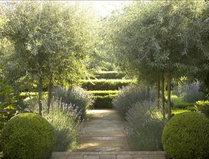 Garden Designer Visit Lavender Fields in Australia Fudge