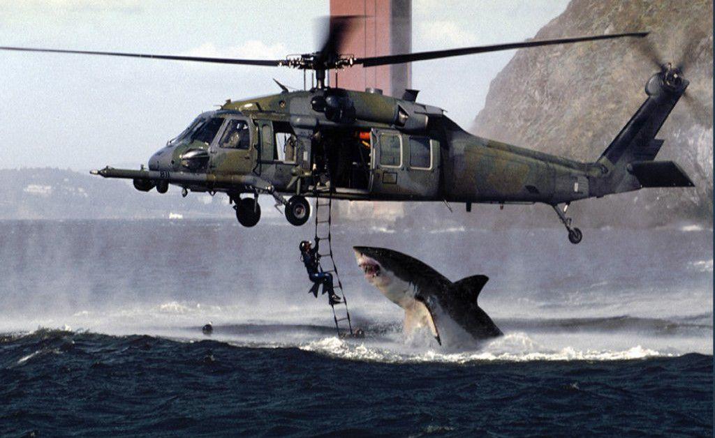 Great White Shark Attacks Wallpapers - HD Wallpapers Inn