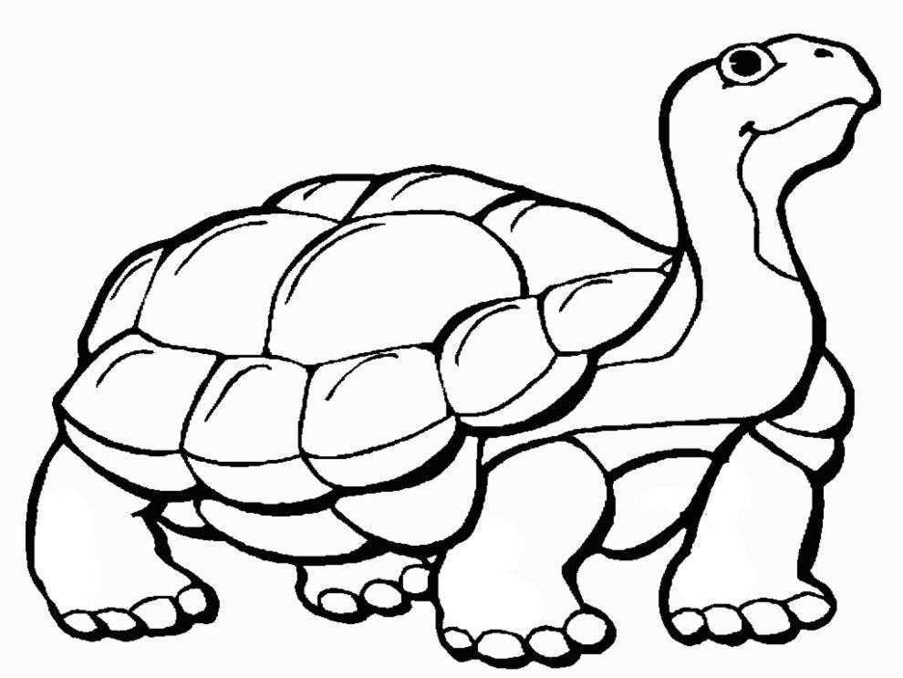 Disegni Di Animali Da Stampare E Colorare Gratis Tartarughe
