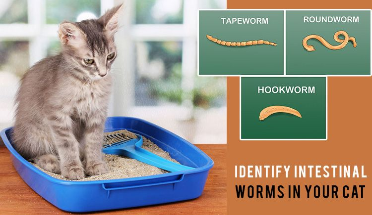 Identify Intestinal Worms In Your Cat Worms Pet Health Cats