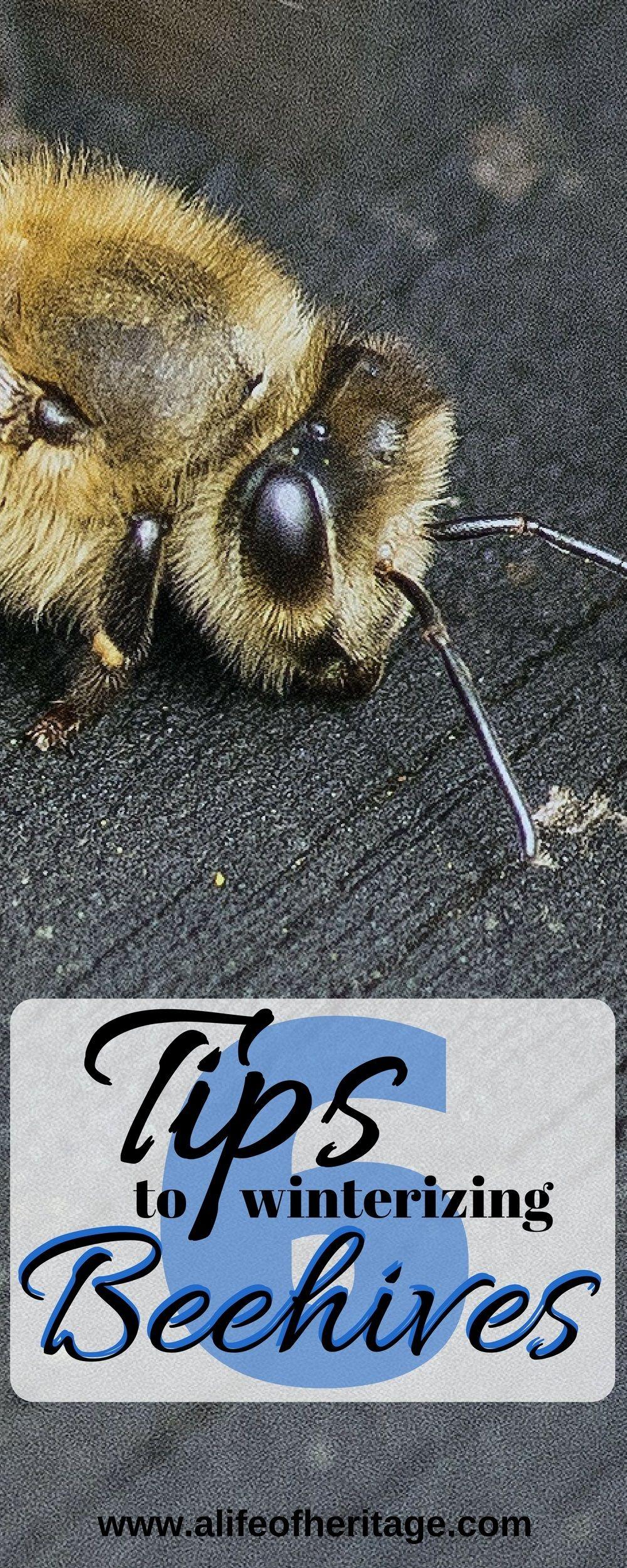 6 Tips to Winterizing Bee Hives | Anatomía