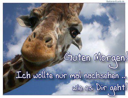 Pin Von Chrizzi Auf Grüsse Lustige Guten Morgen Bilder