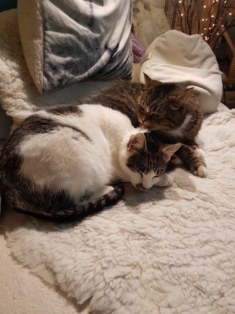 Lví hrátky Žabička Badík. slunéčko hra na schovávanou koťě.