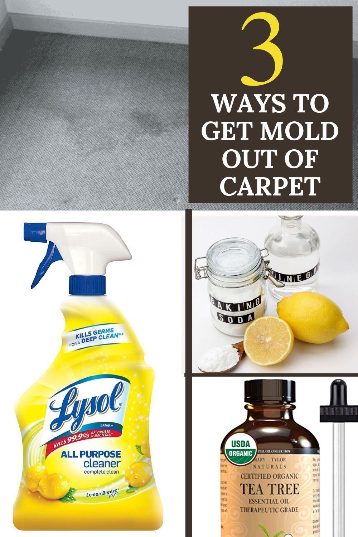 1a80f32f3bf3b47a8be28474de2b66ac - How To Get Rid Of Mold Out Of Carpet