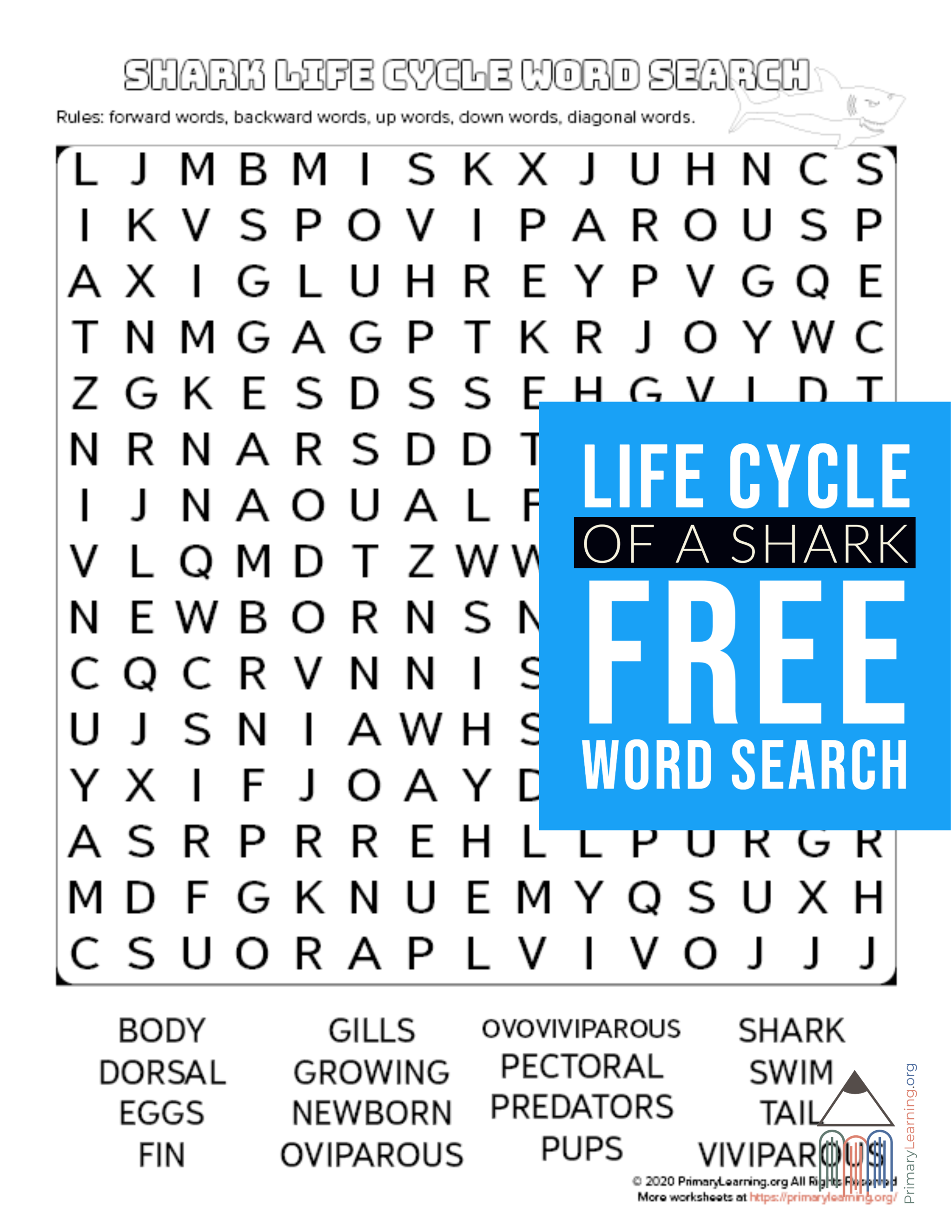 Shark Life Cycle Word Search