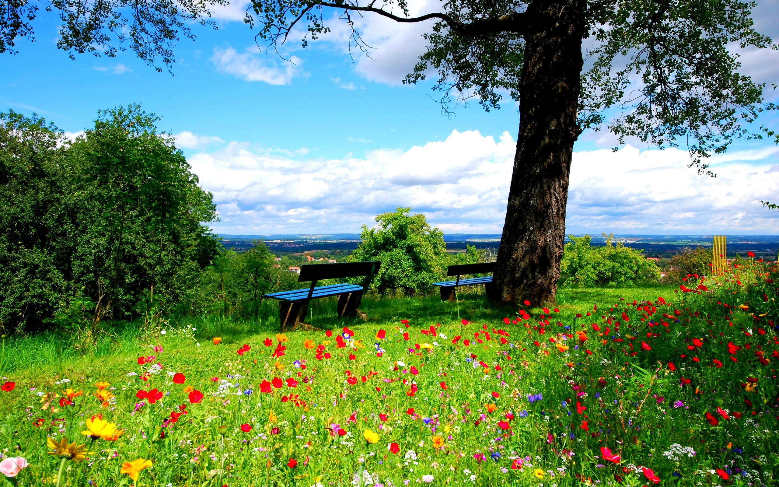 A field of colorful flowers beautiful nature landscape for Beautiful flower landscapes