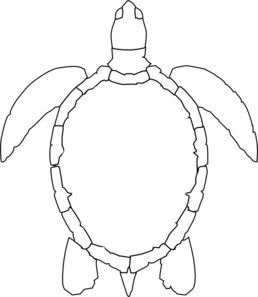 sea turtle template  Google Search  drawings  Pinterest  Sea