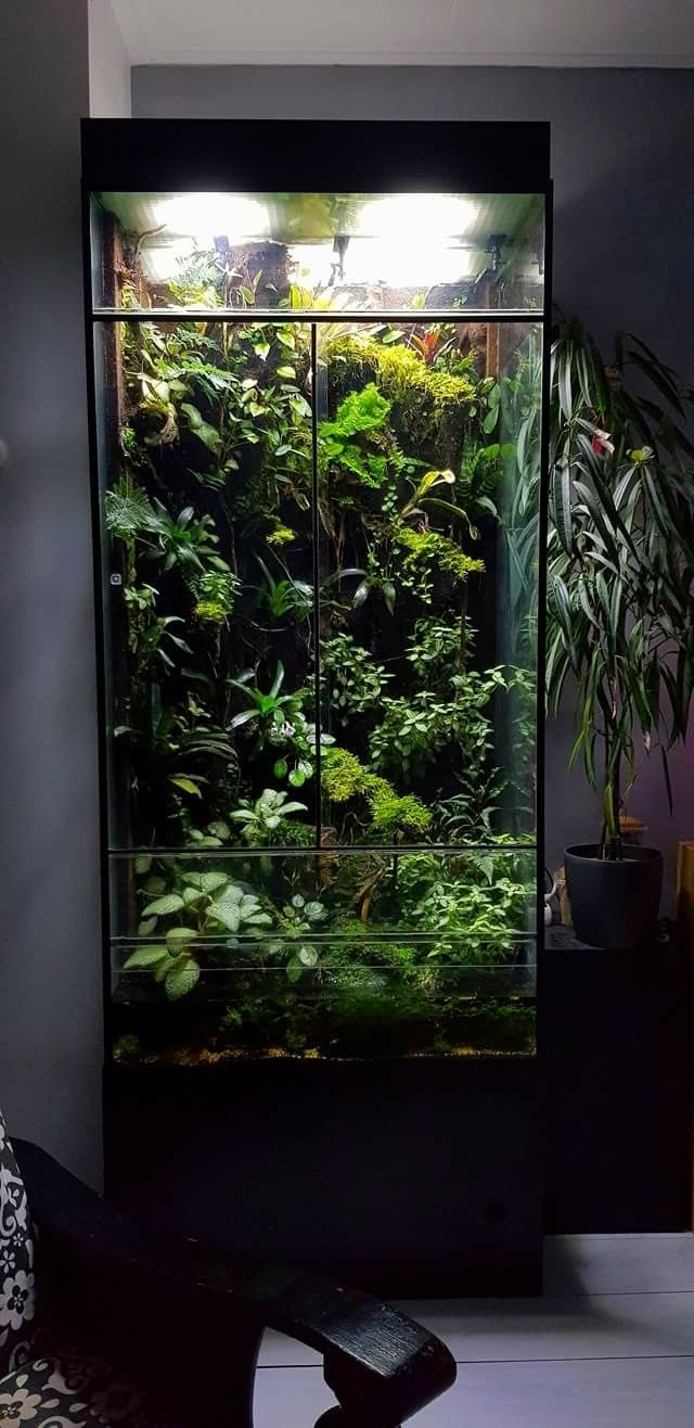 By mark verhagen ariums pinterest vivarium terraria and aquariums