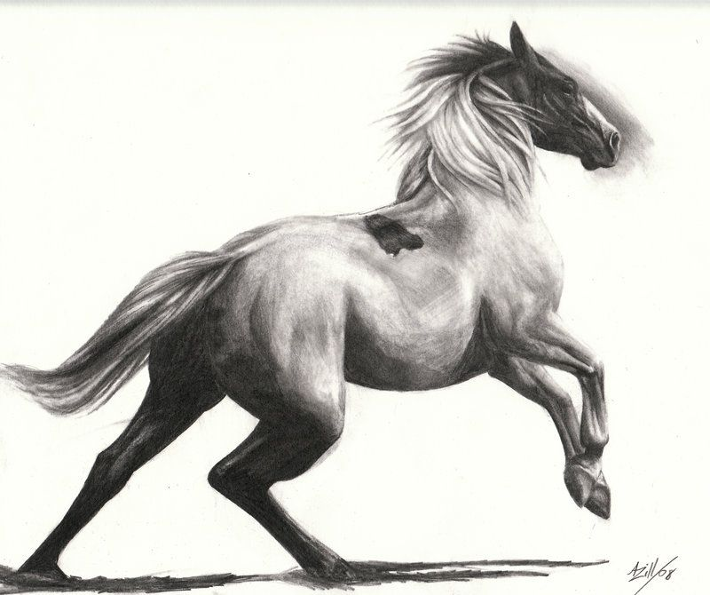 Horse Drawings and Sketches | Horse Running by *alyzill on ... - photo#19